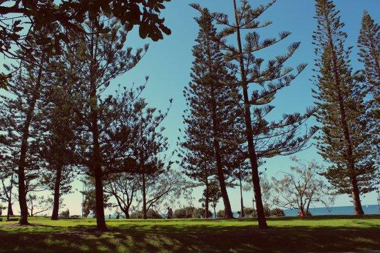 mooloolaba trees